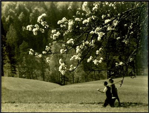 Na polje